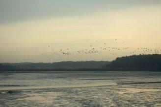 ptáci voda rybník - IMG_8744