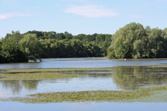 rybník Kotvice - IMG_1798
