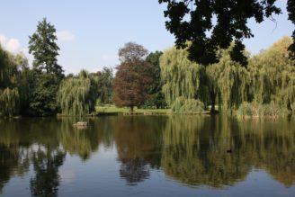 Stromovka rybníky 2 - IMG_3669