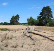 Zemědělské sucho - Písečný přesyp je zárodek budoucí pouště - IMG_8805