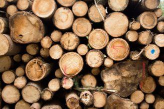 dřevo těžba