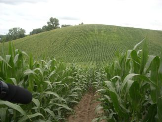 eroze - DSCN1462 kukuřice
