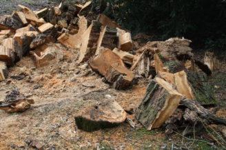 pokácený strom - dřevo - IMG_2315