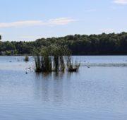 rybník Kotvice ptáci - IMG_1824