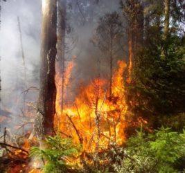 požár les