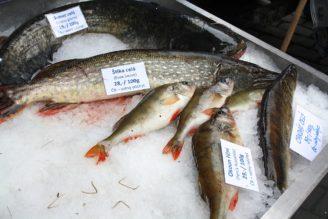 sladkovodní ryby - IMG_7699