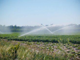 závlahy zavlažování zelenina - IMG_0307