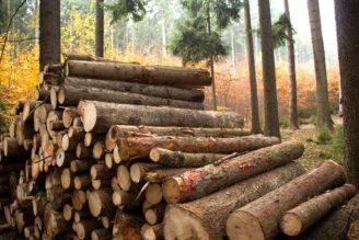 dřevo - IMG_9331