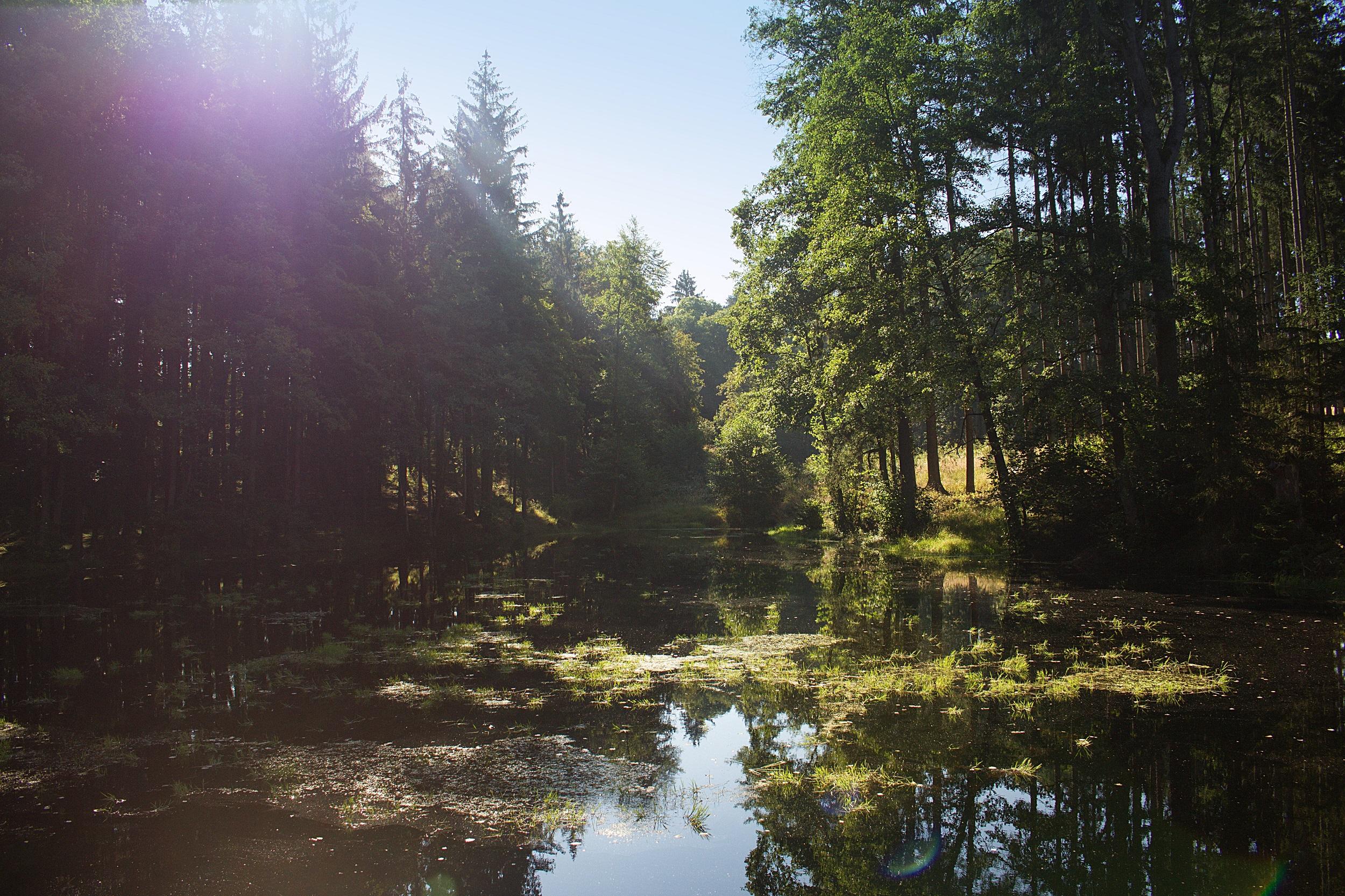 revitalizace rybník - Raška III - Pozorka Kladruby - IMG_5573