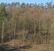 sucho borovice VÚLHM