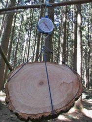 VÚLHM - kvantifikace biomasy