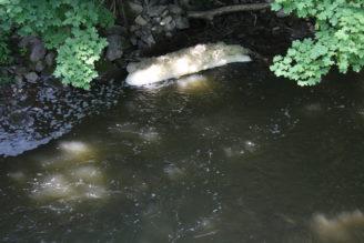 znečištěná voda IMG_0301