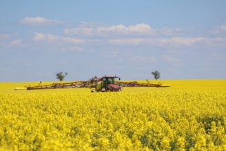 řepka chemie krajina velkoplošné zemědělství