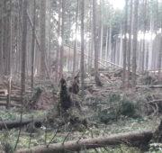Lesy ČR kalamita vichřice říjen 2017