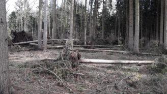 Lesy ČR - následky vichřice Choustníkovo Hradiště říjen 2017