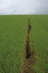 hloubková rýhová eroze pšenice - Tomáš Kvítek Povodí Vltavy