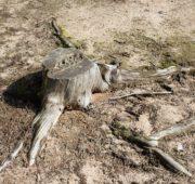 sucho pařez - IMG_6022