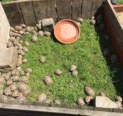 ČIŽP - želvy