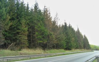 silnice les