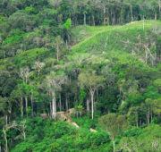 Amazonský prales osel