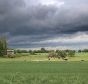 krajina bouřka déšť - IMG_1343