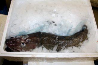 mořská ryba - IMG_3049
