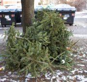 odpad odpady biomasa vánoční stromky - IMG_2180_-_kopie