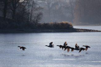 ptáci voda