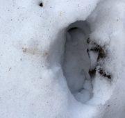sníh - stopa - IMG_2543