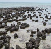 stromatolity - osel