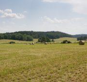 zemědělská krajina 2