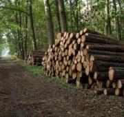 dřevo těžba - IMG_5973