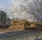 dřevo zima jinovatka - IMG_1757