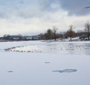 rybník led kachny - IMG_0778