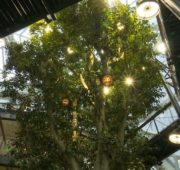 zeleň město Amazon Reuters
