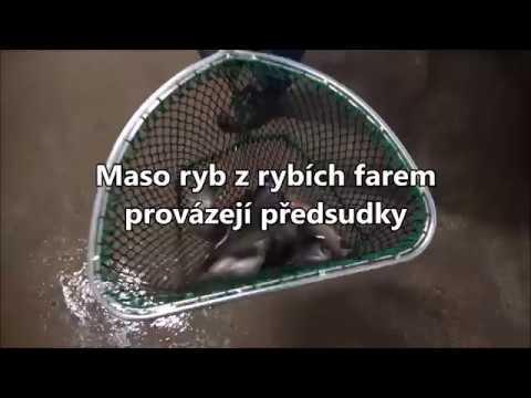 Maso ryb z rybích farem provázejí předsudky