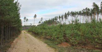 porost borovice lesní VÚLHM