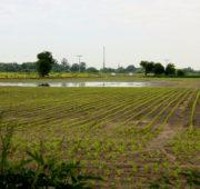 povodeň - pole - IMG_3267