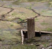 sucho - rybník - IMG_2687