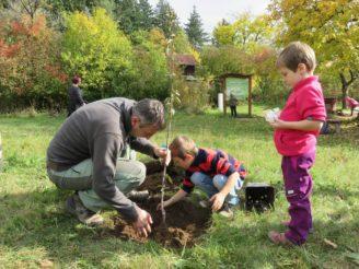 výsadba strom Nadace Partnerství
