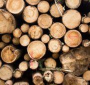 dřevo - IMG_9329