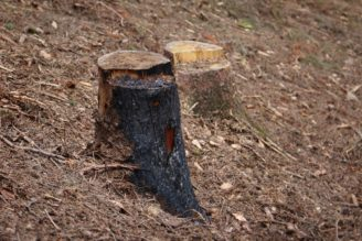 les požár následky - IMG_3778