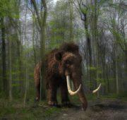 mamut Creative Commons