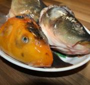 rybí polévka - kapří hlavy - IMG_1777