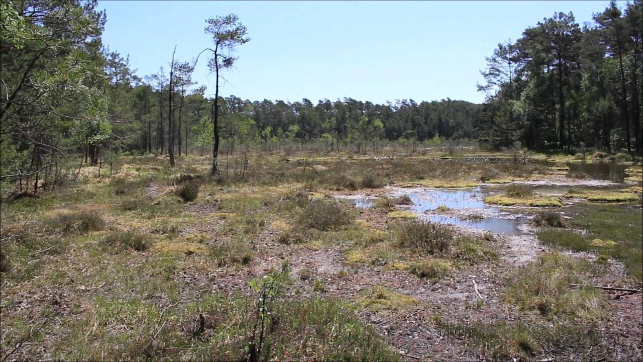 SWAMP – Národní přírodní památka u Máchova jezera