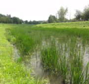 řeka Jihlava lokalita Staré hory červen 2018 PMO
