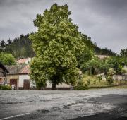 Zádvorská lepa strom roku 2018 finalista Marek Olbrzymek