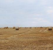 balíky - pole - krajina - sklizeň - sláma- IMG_1526
