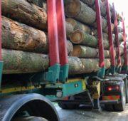 dřevo těžba kůrovec - IMG_7290