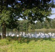 jeden z pozůstatků pernštejnské rybniční soustavy - Bohdanečský rybník